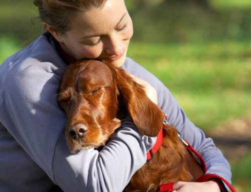 Pets: More forgiving than their owners?